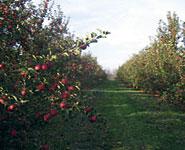 Dubois Farms
