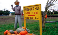 prospect-hill